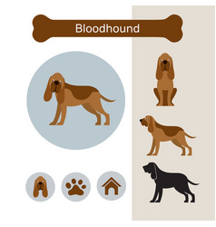 Bloodhound dog breed infographic vector
