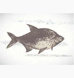 Fish bream vector