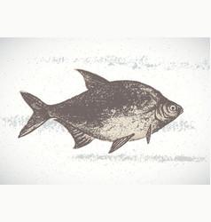 fish bream vector image