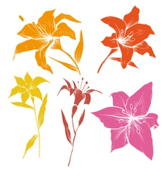 Hand drawn lilly flower set vector image
