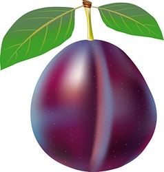 Plum with stem and green leaf vector image