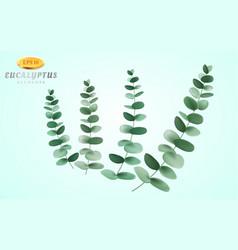 Set eucalyptus inflorescence on light vector