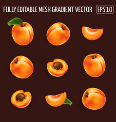 Set ripe apricots on a dark background vector
