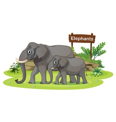Two elephants near the signboard vector image