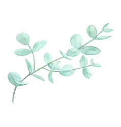 Watercolor drawn green plant deocration on white vector