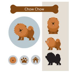 Chow chow dog breed infographic vector