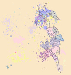 drawing iris flower vector image