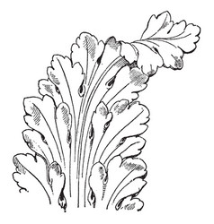 French leaf renaissance is a long leaves pattern vector