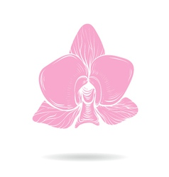 Hand drawn orchid flower pink vector