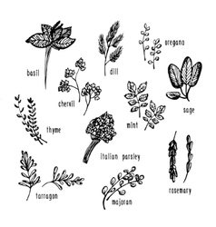 Hand drawn set with culinary herbs and spices vector