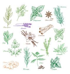 Icons spice seasonings or herb flavorings vector
