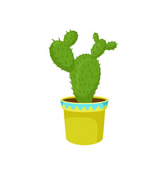 opuntia cactus in a pot home plant in a flowerpot vector image