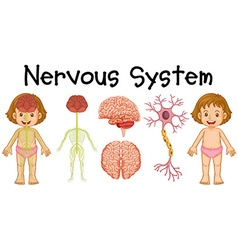 Nervous system of little girl vector image vector image