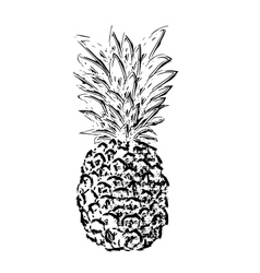 Pibapple sketch vector image