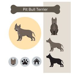 pit bull terrier dog breed infographic vector image