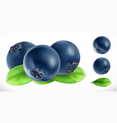 Blueberry fresh fruit 3d realistic icon vector