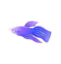 Bright lilac betta fish with big flipper banner vector