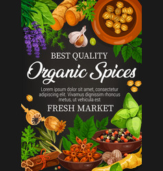 Natural food condiment and organic spices vector