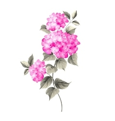 Purple flower hydrangea vector image