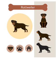 Rottweiler dog breed infographic vector