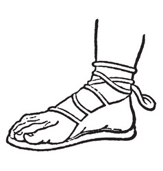 Sandal is still the well-known custom vintage vector