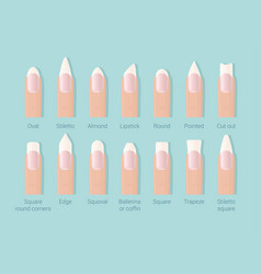 different shapes of nails professional female vector image
