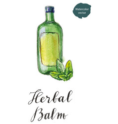 green bottle of herbal balm with green leaves vector image vector image