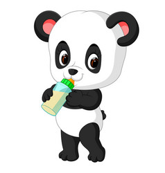 Cute baby panda holding milk bottle vector