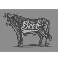 Hand drawn beef vector