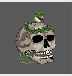 human skull with snake vector image