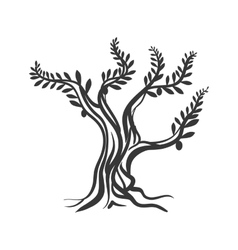 Olive tree icon Organic and healthy food design vector image
