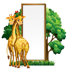 Two giraffes and blank whiteboard vector