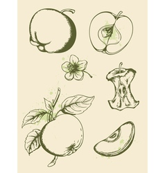 Vintage ripe apples vector