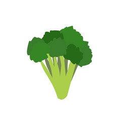 Broccoli isolated greens on white background vector