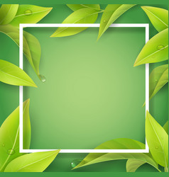 Green leaves with water drops and white frame vector