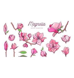 magnolia flower set hand drawn botanical 2 vector image