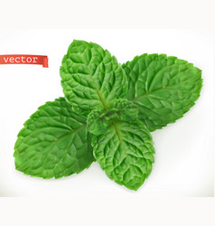 Mint leaves 3d realistic icon vector