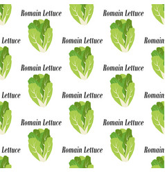romain lettuce seamless pattern vector image