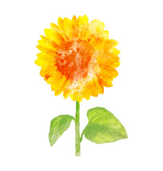 Watercolor sunflower on white vector