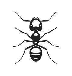 black ant insect vector image