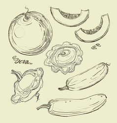 hand drawing juicy melons vector image