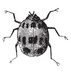 Ladybug vintage vector