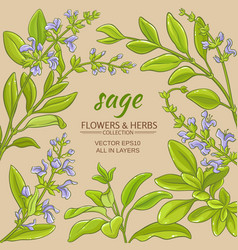 Sage frame vector