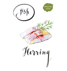 Two pieces herring with dill vector