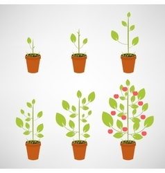 Growing tree icon set vector image