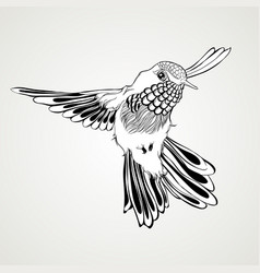 Hand drawn flying humming bird vintage style vector