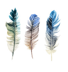 hand drawn watercolor feathers with ornaments vector image