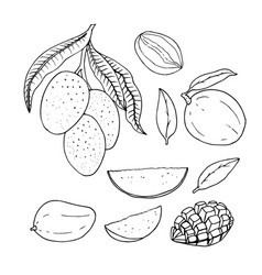 Linear set of mango line drawing vector
