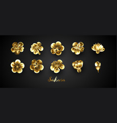 set golden sakura flowers vector image