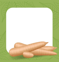 Banner frame cassava fresh for copy space vector